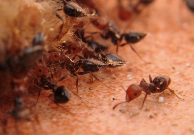 Image ants